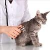 Ветеринарные клиники в Мичуринске